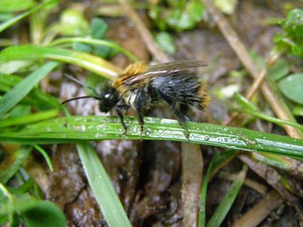 wetbee