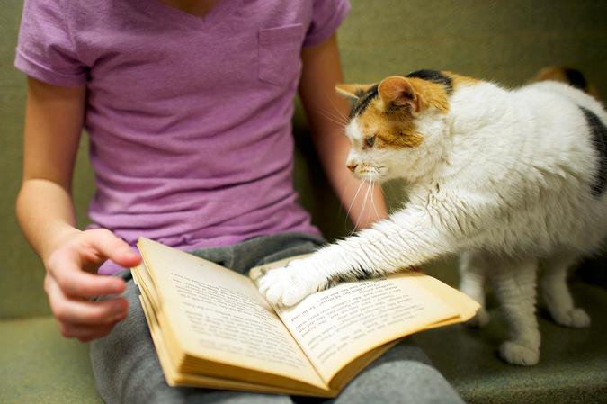 Мальчик читает коту книгу