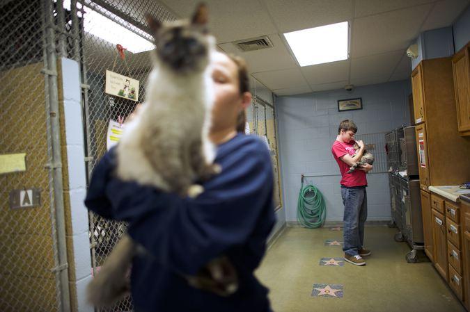 Трей Дуглас беседует с Кассандрой Краус о том, как они читают для кошек.
