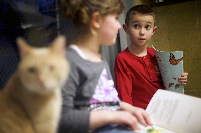Зейн, полосатый кот, слушает книгу, которую читают Трей Дуглас и Кассандра Краус.