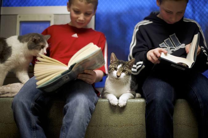 Сет и Итан Уиггинс читают Стюарт и Тайлер.