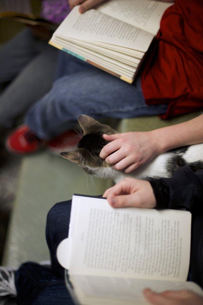 Пожалуйста, не выпускает кошек, не важно, что они вам при этом говорят
