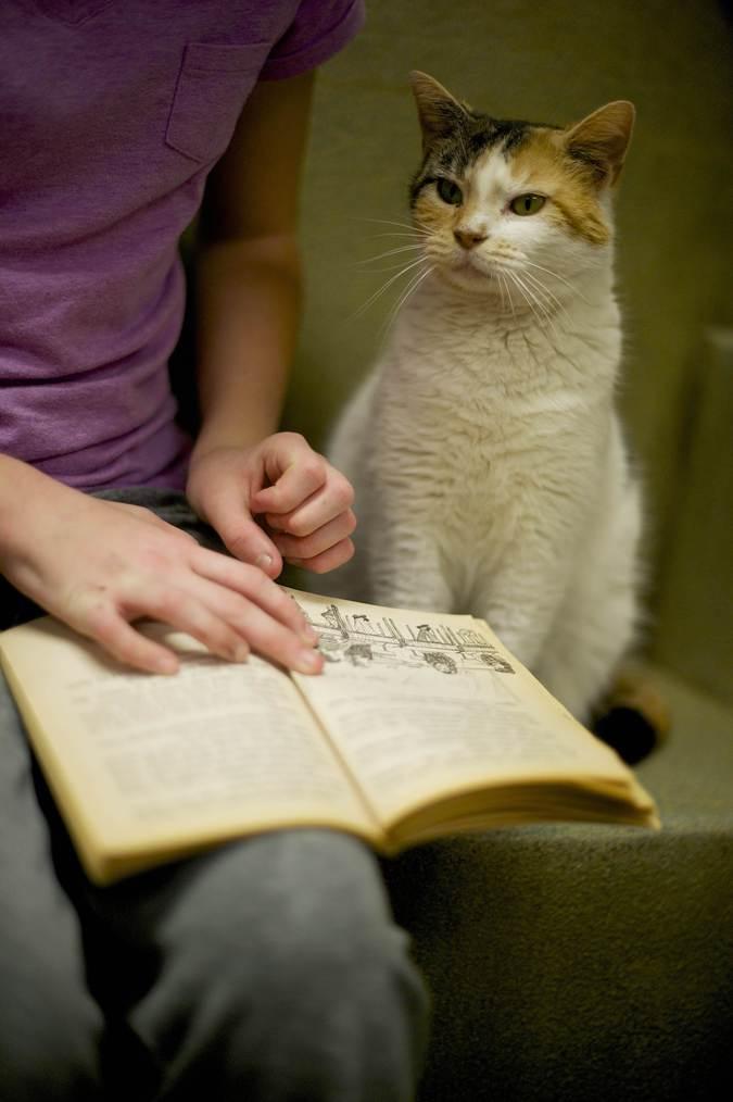 Кейтлин Каркошка читает кошке Джингл.